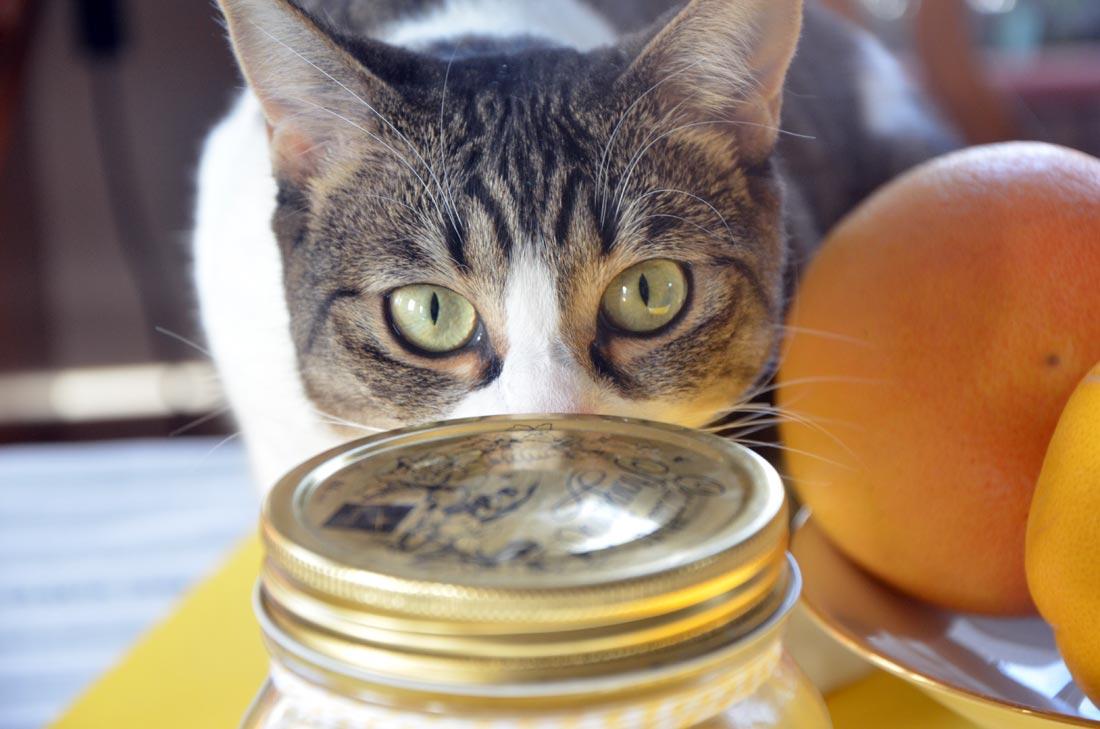 Citrons Confits pour des Cadeaux gourmands avec Tiger Lili en invité surprise