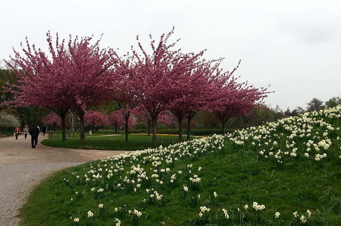 sugar paris parc floral