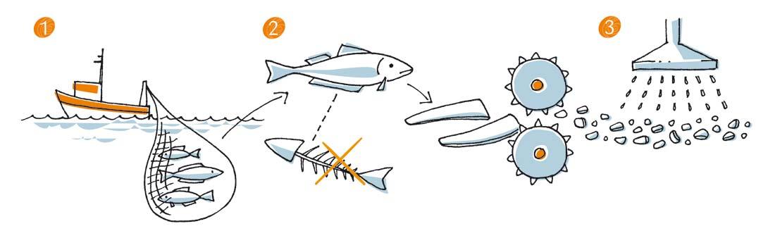 les 3 premières étapes de la fabrication du surimi