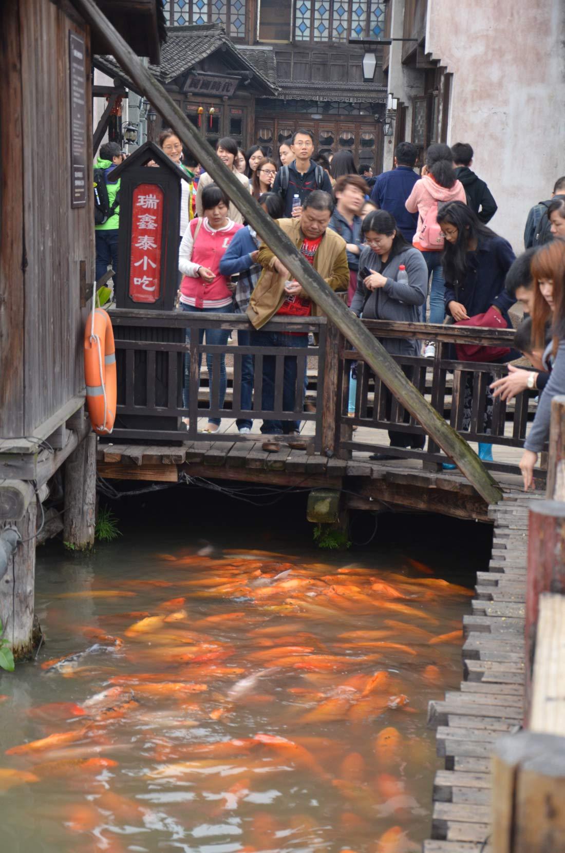 pont où sont nourris les poissons à Wuzhen