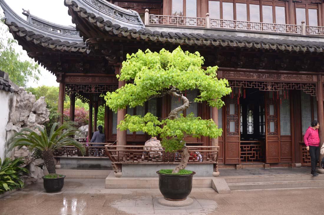 dans le jardin Yu