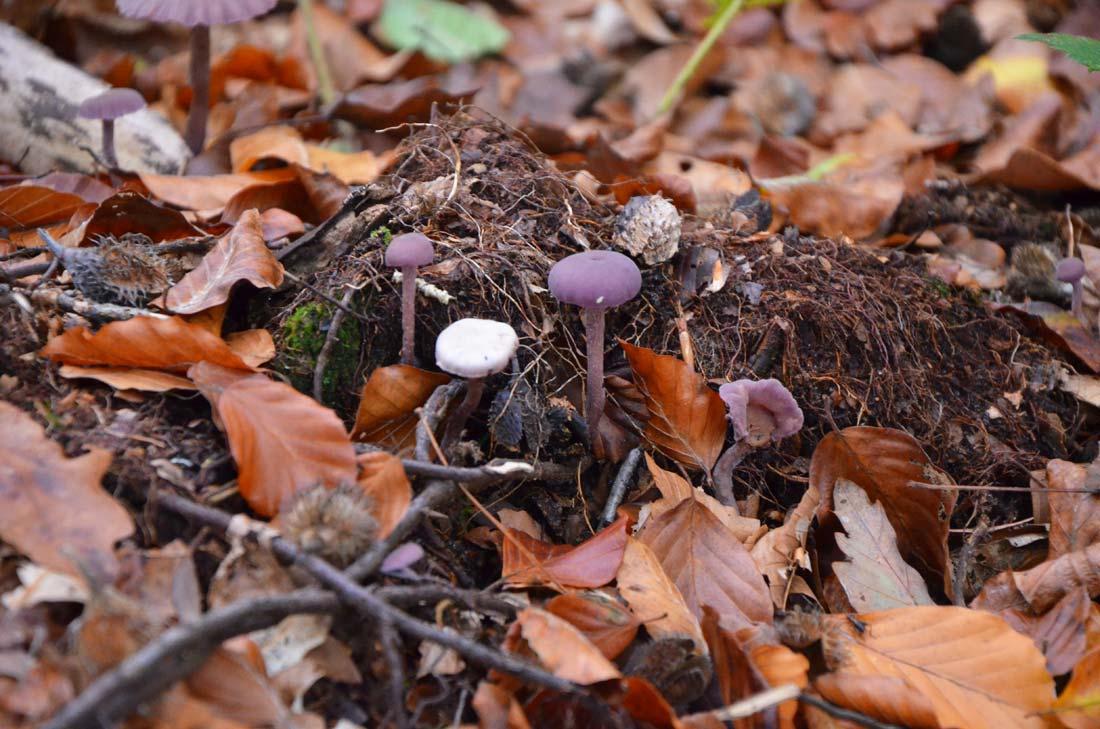 à la recherche des champignons
