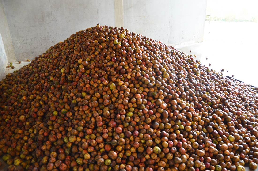 stock de pommes à cidre