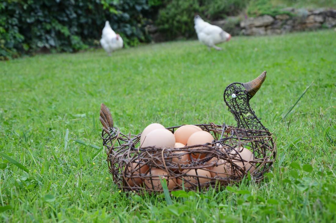 poules du jardin