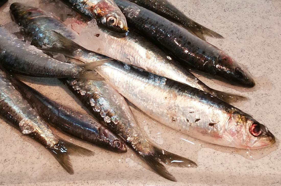 Rillettes de sardines fraiches turbigo gourmandises - Cuisiner des filets de sardines fraiches ...