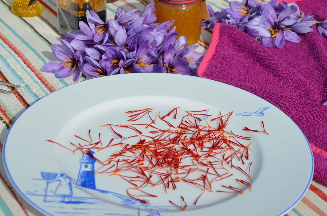 pistils frais de safran de Marennes