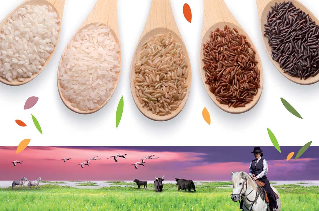 jeu riz de camargue