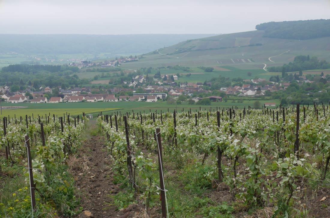 Vignobles du champagne Leclerc Mondet