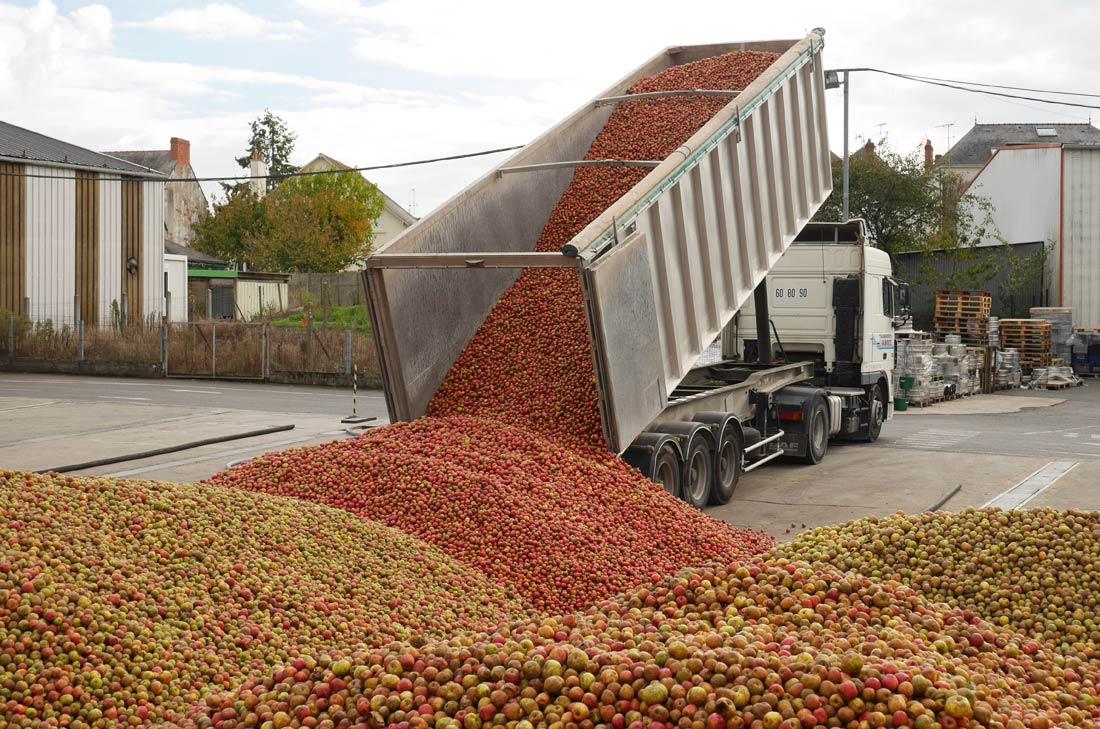déchargement des pommes à la cidrerie Kerisac