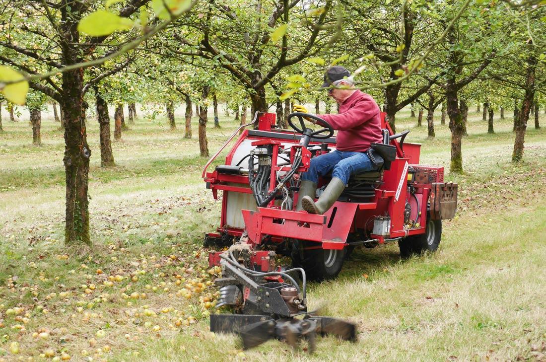 ramassage pommes Kerisac