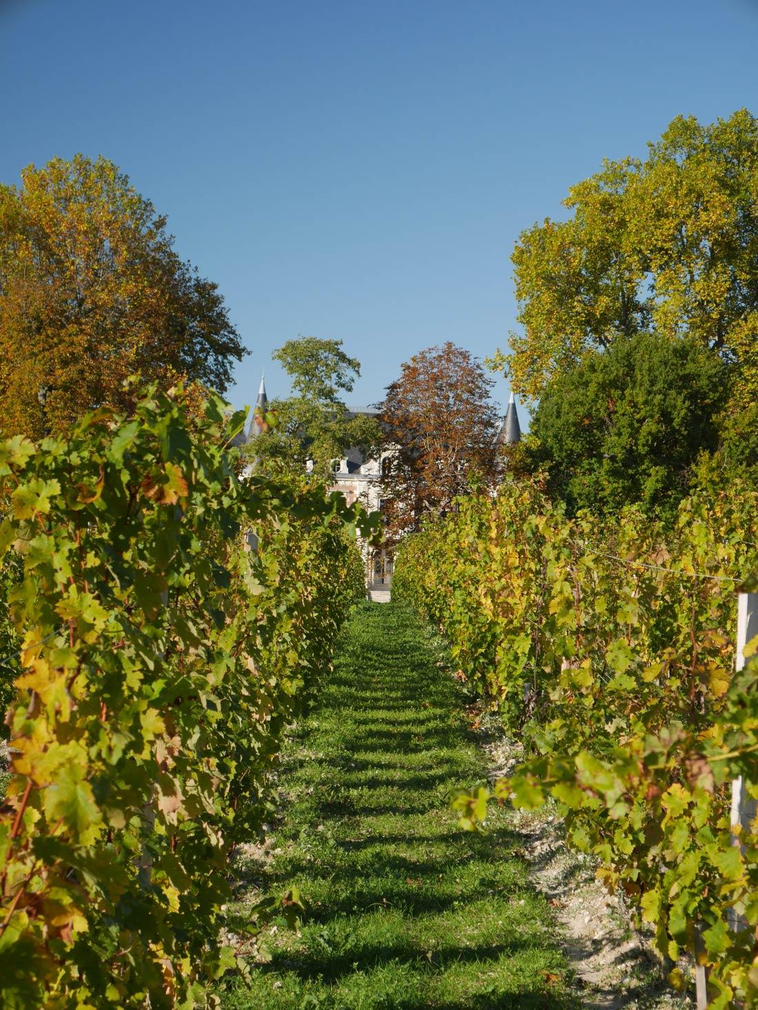 Château Lamothe Bergeron et vignes