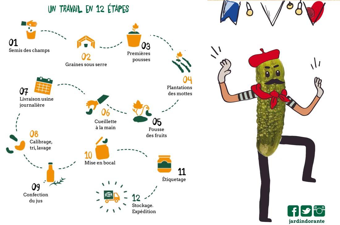 fabrication des cornichons français