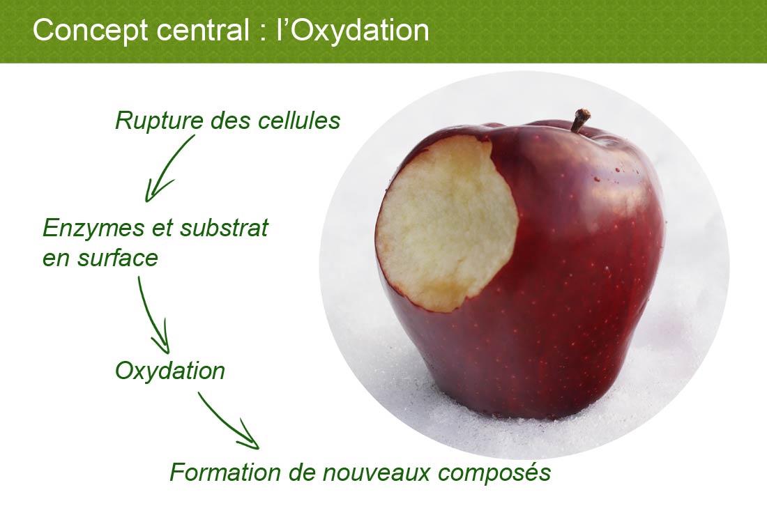 concept oxydation du thé