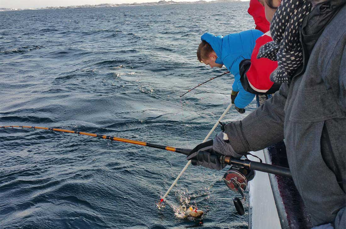 pêche au skrei