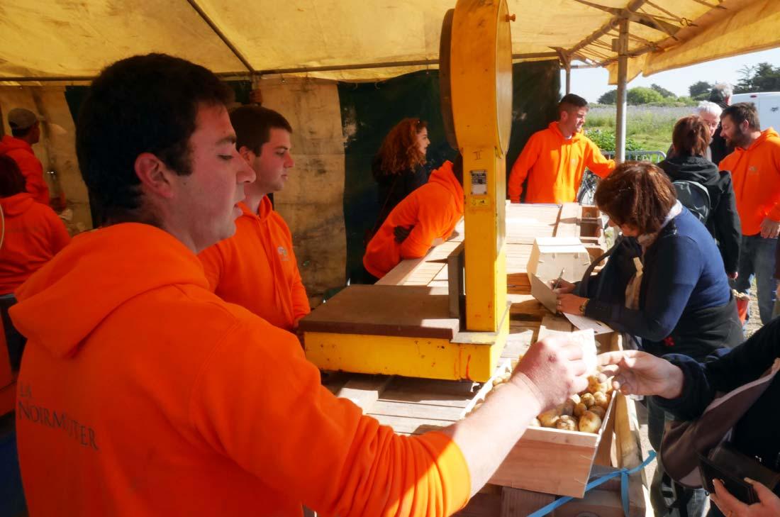 Les jeunes paysans producteurs de bonnottes à Noirmoutier