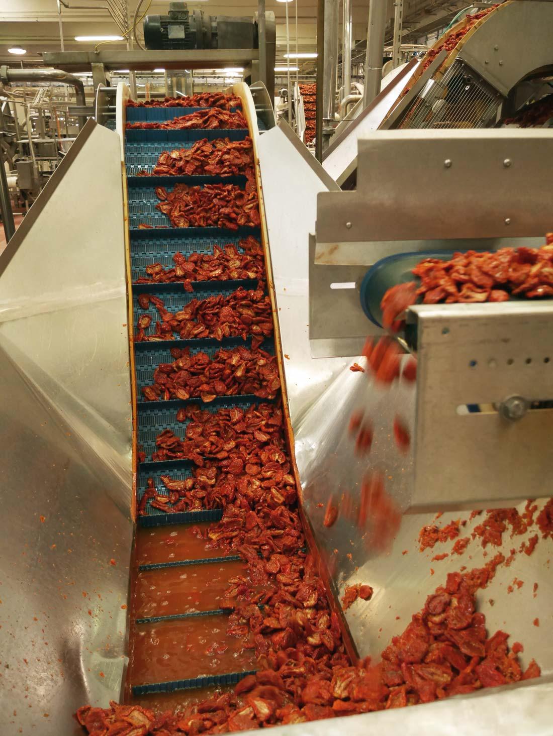 tomates séchées dans l'usine Polli
