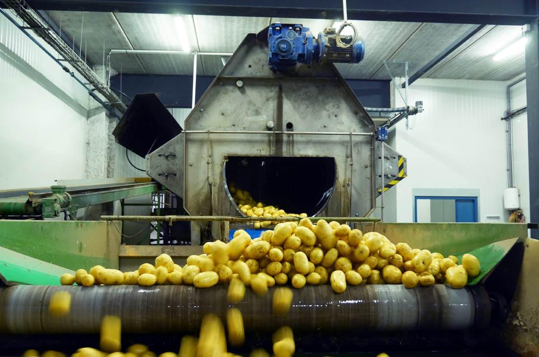 lavage pommes de terre