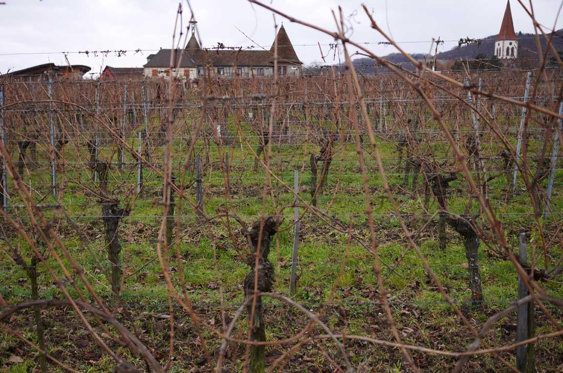 vignobles d'Alsace chez Étienne Simonis