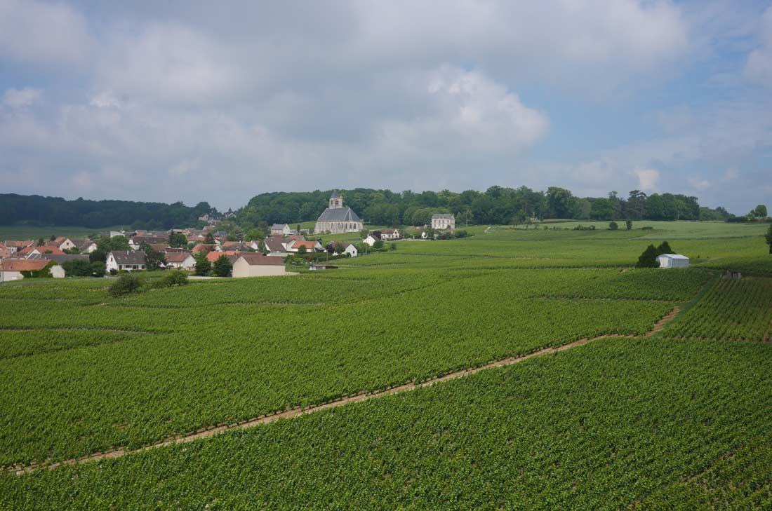 vignes Le Brun de Neuville