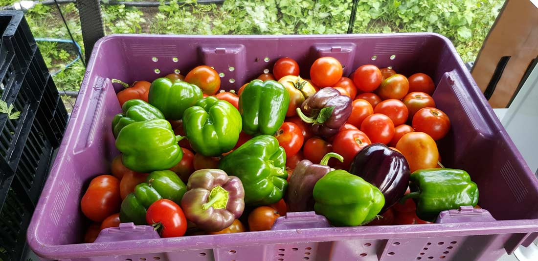légumes de la ferme maraichère La Bordée des Corneilles