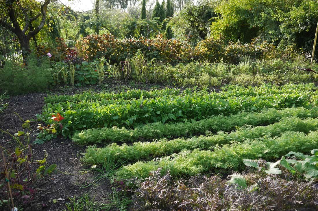 carré d'herbes du jardin de la Chassagnette