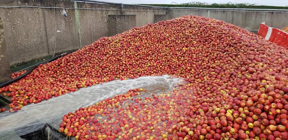 lavage pommes à cidre Val de Rance
