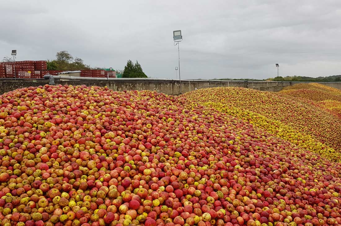 pommes à cidre Val de Rance