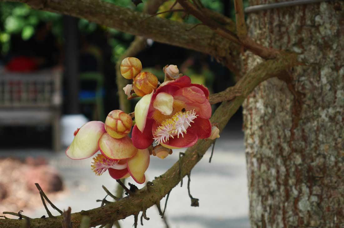 fleur jardin botanique de Singapour