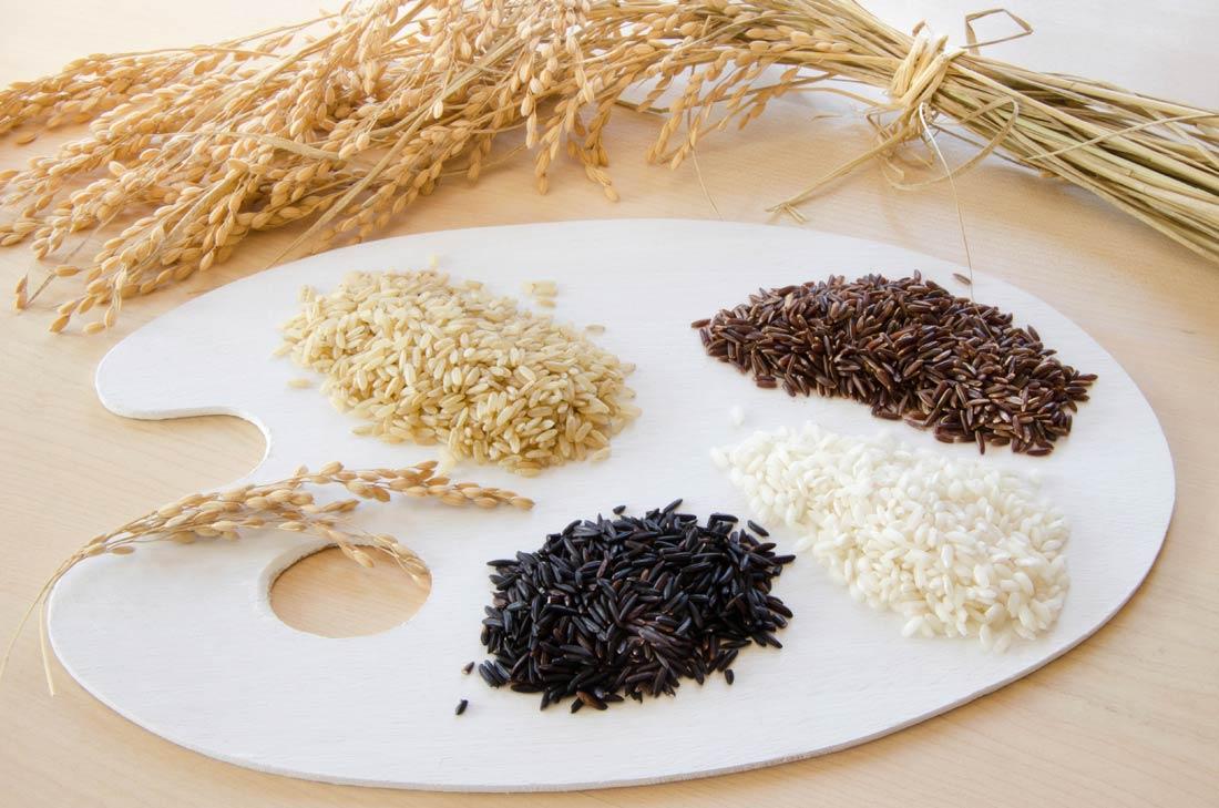 Les différents riz de Camargue