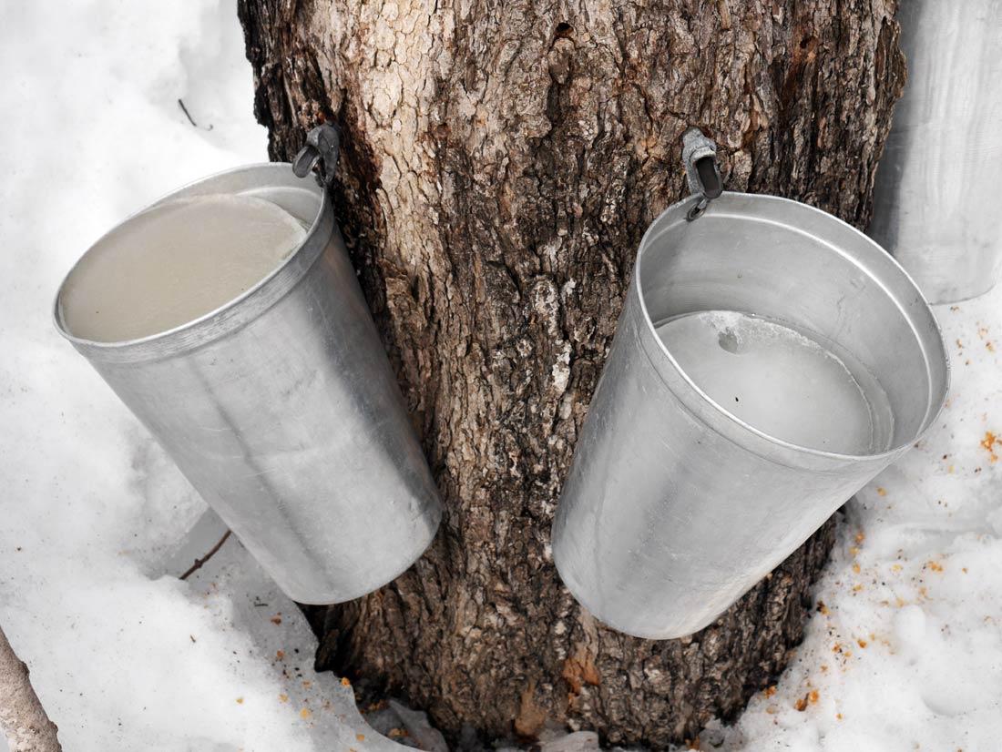 Chaudière emplie d'eau d'érable gelée