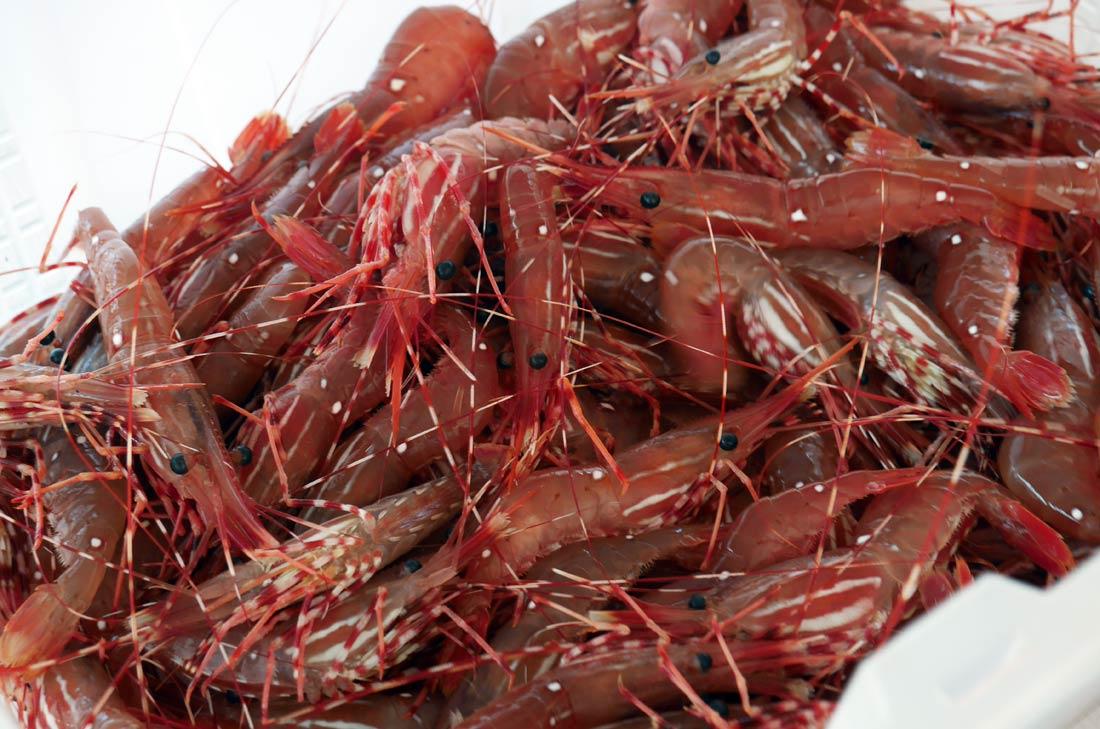 Crevettes tachetées de Vancouver
