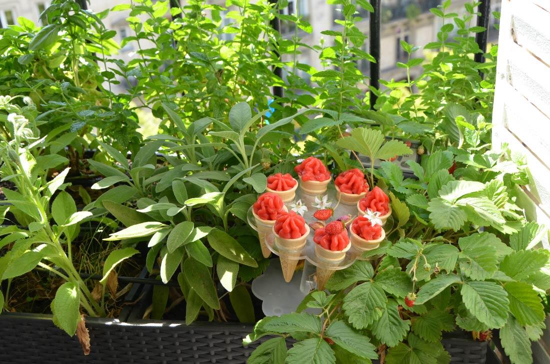 Jardinière de mon bureau et sorbet fraise et rose