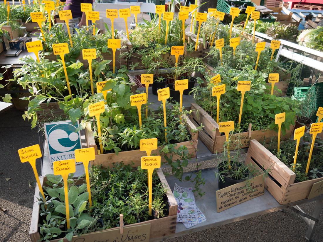 Herbes fraiches vendues sur le marché d'Arles